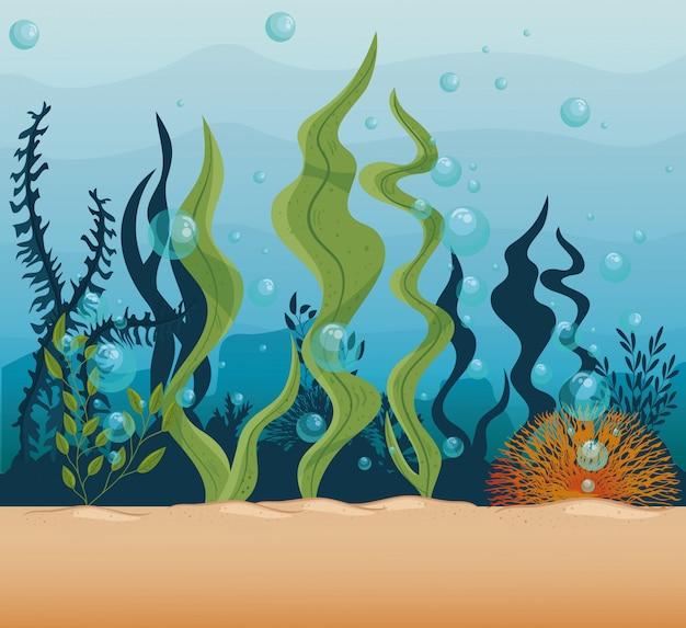Fundo subaquático, recife submarino, oceano com cena de algas marinhas, conceito de habitat marinho