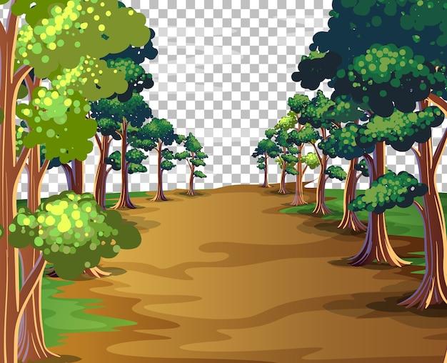Fundo transparente da natureza ao ar livre