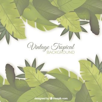 Fundo tropical com design vintage
