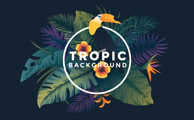 Fundo tropical com moldura