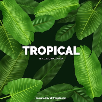 Fundo tropical moderno com design realista