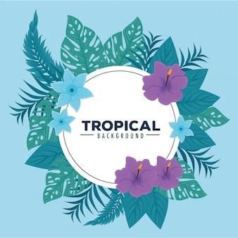 Fundo tropical, quadro circular com hibisco, ramos e folhas tropicais