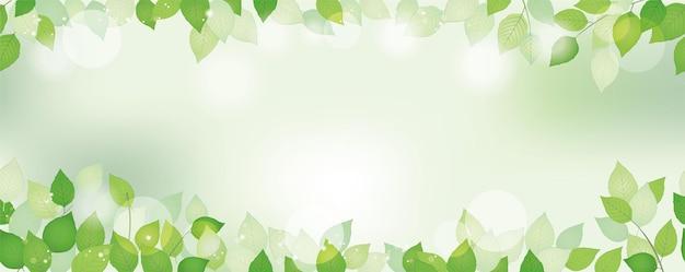 Fundo verde fresco aquarela sem costura com espaço de texto, ilustração vetorial. imagem ambientalmente consciente com plantas e luz solar. repetível horizontalmente.