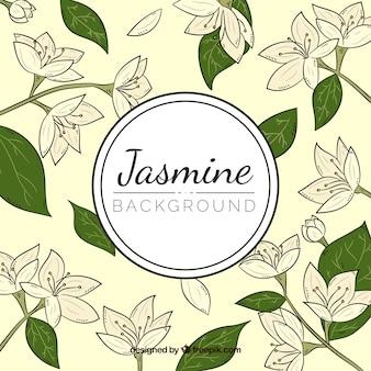 Fundo vintage de jasmim desenhado a mão