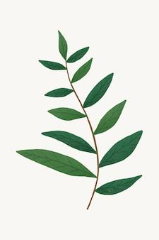 Galho com elemento de design de folhas verdes