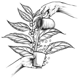 Galho de árvore de respingo de café. estilo vintage café gravado