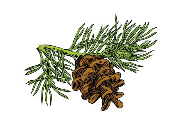 Galho de pinheiro com cone e agulhas