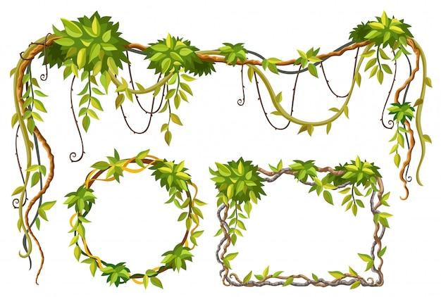 Galhos e folhas de liana