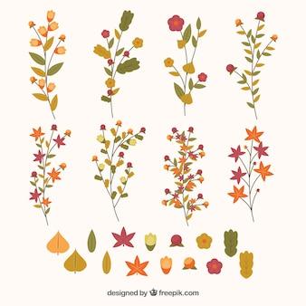 Galhos, flores e folhas bonitos em cores quentes