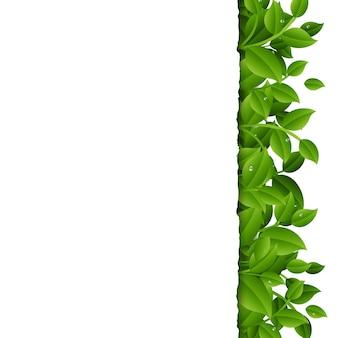 Galhos verdes com bordas de folhas