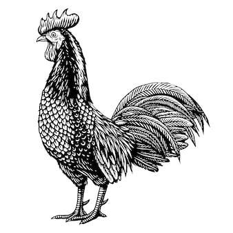 Galinha de galo gravando ilustração desenhada à mão