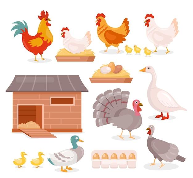 Galinha e galo com pintinhos, peru, ganso e pato com patinhos, aves domésticas