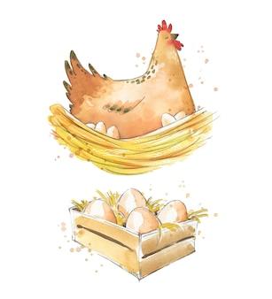 Galinha sentada nos ovos e uma caixa com ilustração em aquarela de ovos frescos