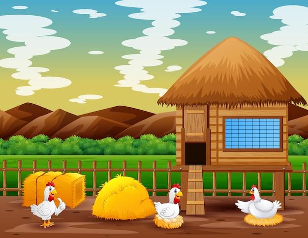 Galinhas e galinheiro na fazenda