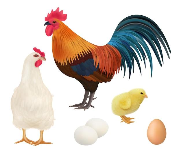 Galinhas e ovos realistas