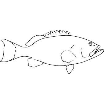 Garoupa de albacora desenhada à mão clipart vetorial desenhada à mão