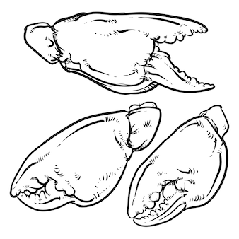 Garras de caranguejo isoladas no fundo branco