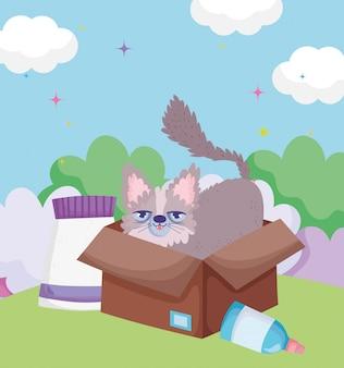 Gatinho fofo em caixa de papelão com comida de animais de estimação ao ar livre