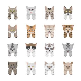 Gato bonito enfrenta ícones planas