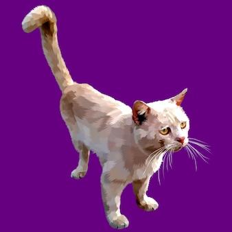 Gato bonito olhando para cima isolado em um fundo roxo