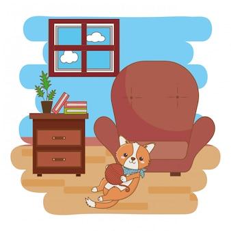 Gato brincando com bola de lã na sala de estar