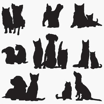 Gato cachorro