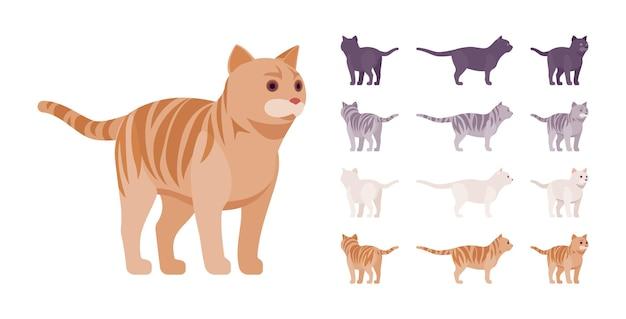 Gato com pedigree listrado branco, preto, laranja, cinza em pé conjunto