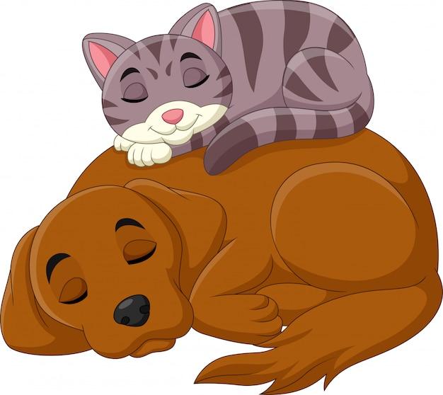 Gato de desenho animado e cachorro dormindo