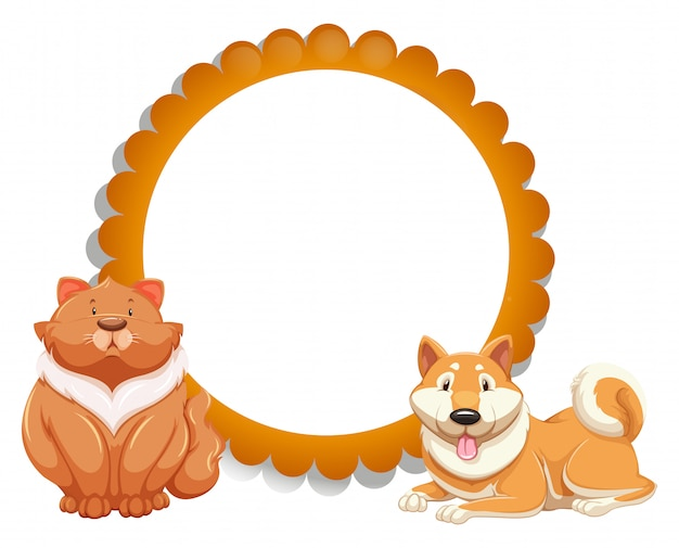 Gato e cachorro