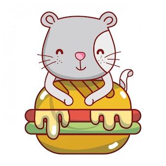 Gato e comida