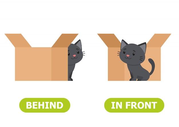 Gato está em pé na frente da caixa e atrás da caixa