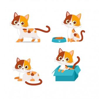 Gato fofo animal de estimação brincando com conjunto de estilo de pose