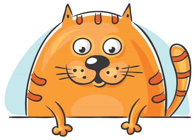 Gato gordo espiando