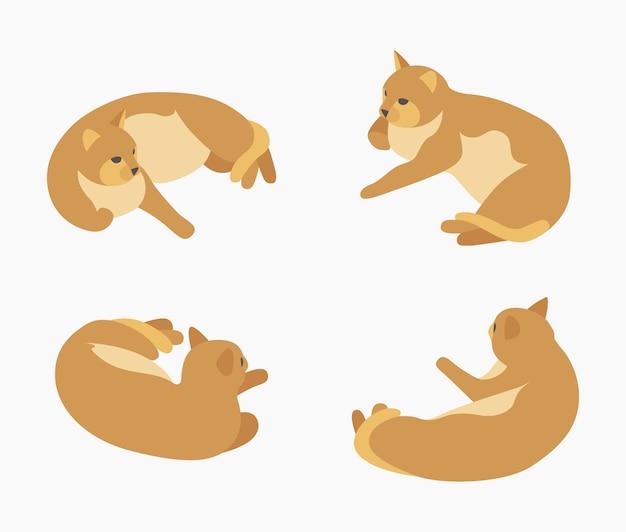 Gato mentiroso vermelho isométrico