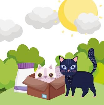 Gato preto na grama e gato branco na caixa com comida de animais de estimação