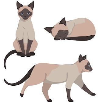 Gato siamês em poses diferentes. lindo animal de estimação em estilo cartoon.