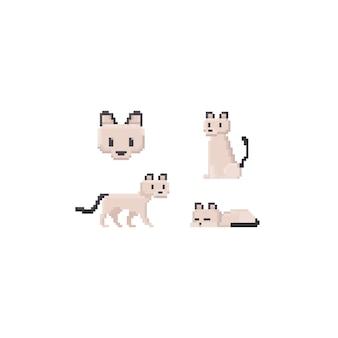 Gato sphynx pixel