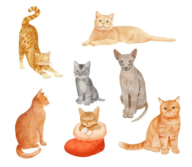 Gatos bonitos da aquarela e gatinho isolado no branco.
