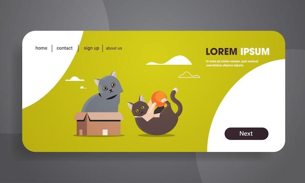 Gatos brincalhões bonitos sentado na caixa de papelão jogando com bola fofo adorável animais dos desenhos animados gatinho doméstico animais de estimação em casa conceito plana horizontal cópia espaço