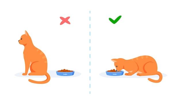 Gatos com bom e mau apetite gato exigente recusando-se a comer e gato faminto comendo comida na tigela