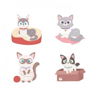 Gatos com caixa e deitado na almofada