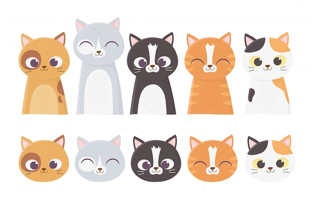 Gatos de estimação enfrenta diferentes felinos raça ilustração dos desenhos animados