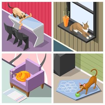 Gatos de raça pura isométricos