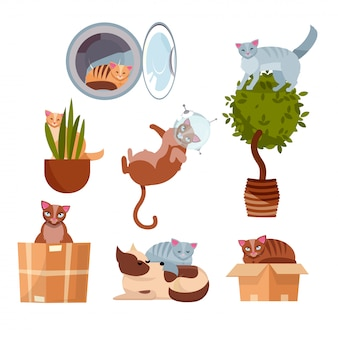 Gatos em lugares engraçados: em uma caixa, em uma máquina de lavar, em uma flor de sala, em uma panela, no espaço, dormindo em um cachorro.