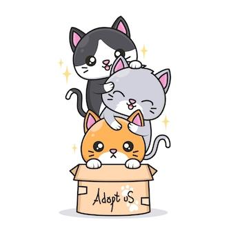 Gatos fofos com cores diferentes na caixa