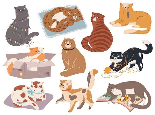 Gatos fofos gatinhos engraçados dormir brincar sentar pegar rato gatinho em várias poses gato feliz e triste