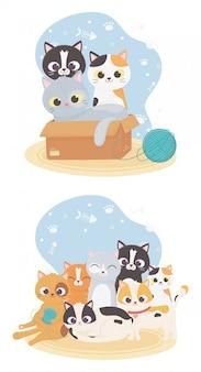Gatos me fazem feliz, gatos fofos em caixa com bola de lã e raças diferentes