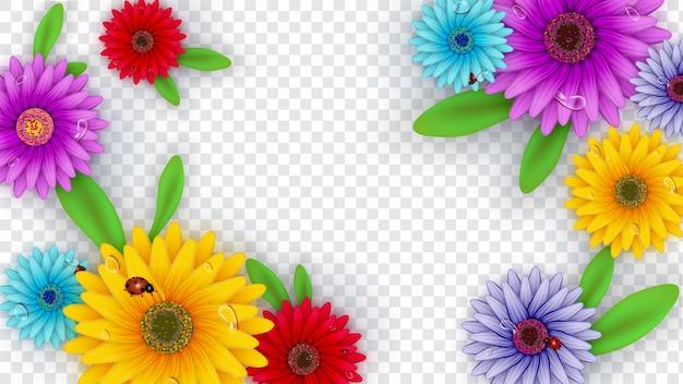 Gerbera flores decoradas em fundo transparente