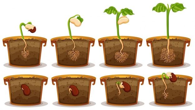 Germinação de sementes em ilustração de claypot