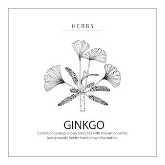 Ginkgo biloba desenhos de folhas e flores